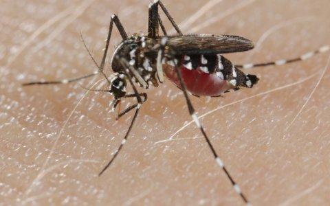 Se registraron tres casos de dengue autóctono en Entre Ríos