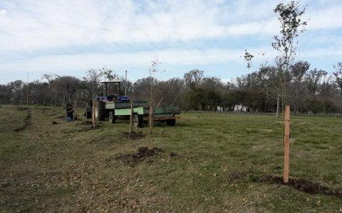 Se plantaron 48 nuevos árboles nativos en el Parque Unzué