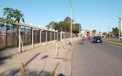 Arbolar Guale: Se plantaron lapachos rosados en la vereda del Hipódromo